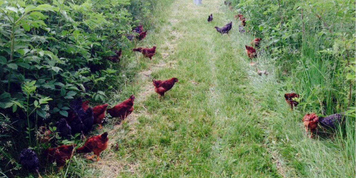 News From the Family Farm-June 2015