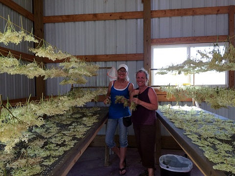 Norm's Farms Elderflower Drying