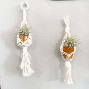 Assorted Mini Macrame Air Plant Holder