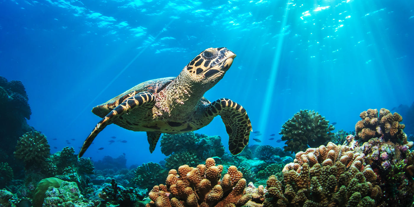 The Best Dive Spots to Swim with Sea Turtles