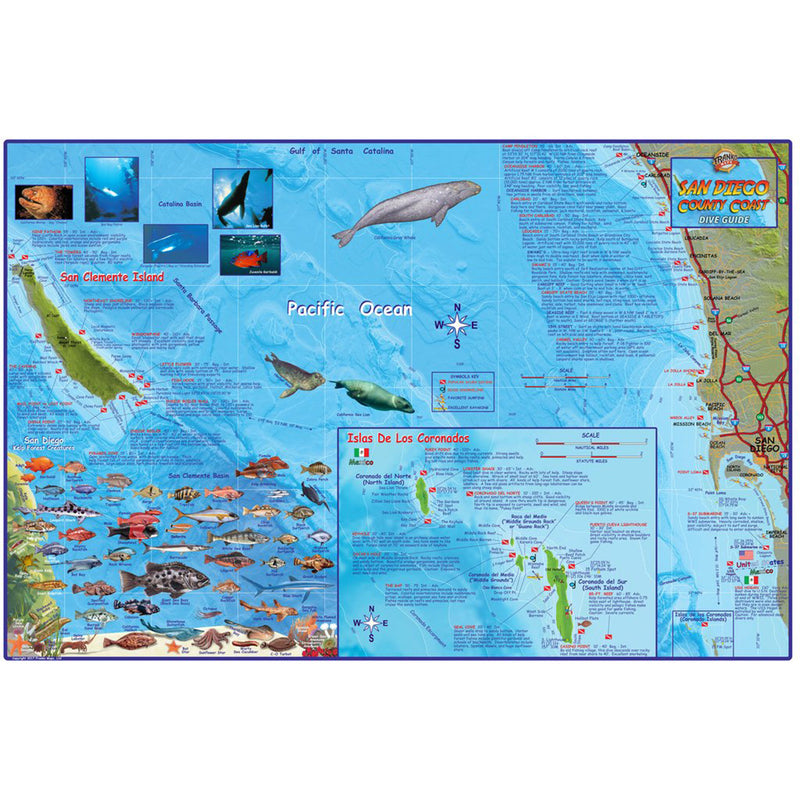 Franko Maps San Diego County Coast Dive Creature Guide 14 X 21 Inch
