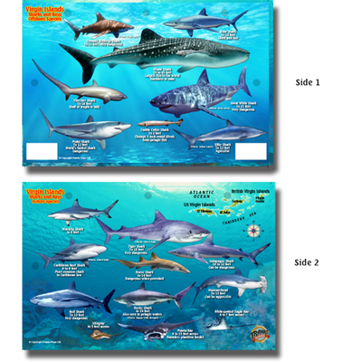 Franko Maps Virgin Islands Sharks Rays Creature Guide 5.5 X 8.5 Inch