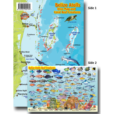 Franko Maps Belize Dive Creature Guide 14 X 21 Inch
