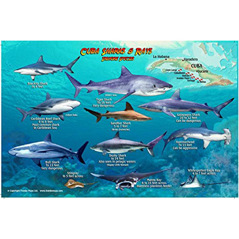 Franko Maps Cuba Sharks Rays Creature Guide 5.5 X 8.5 Inch