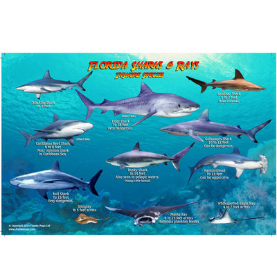 Franko Maps Florida Sharks Rays Creature Guide 5.5 X 8.5 Inch