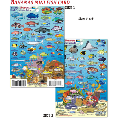 Franko Maps Bahamas Reef Creature Guide 4 X 6 Inch
