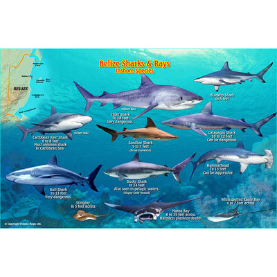 Franko Maps Belize Sharks Rays Creature Guide 5.5 X 8.5 Inch