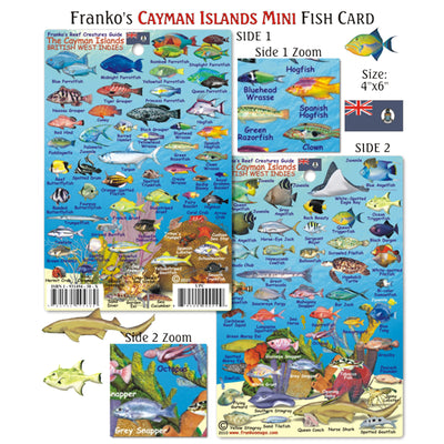 Franko Maps Cayman Islands Creature Guide 4 X 6 Inch