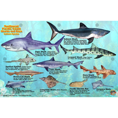 Franko Maps Northwest Pacific Shark Ray Creature Guide 5.5 X 8.5 Inch