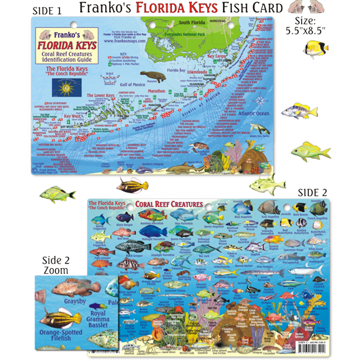 Map Of Florida And Florida Keys.Franko Maps Florida Keys Dive Creature Guide 5 5 X 8 5 Inch