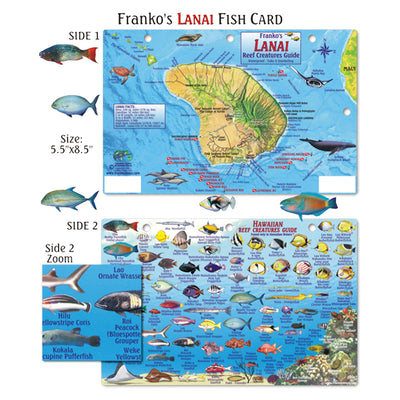 Franko Maps Lanai Hawaiian Reef Dive Creature Guide 5.5 X 8.5 Inch