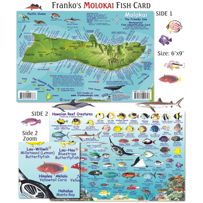 Franko Maps Molokai Hawaii Reef Dive Creature Guide 6 X 9 Inch
