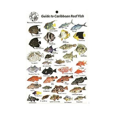 Natural World Press Waterproof Guide to Caribbean Reef Fish ID Card