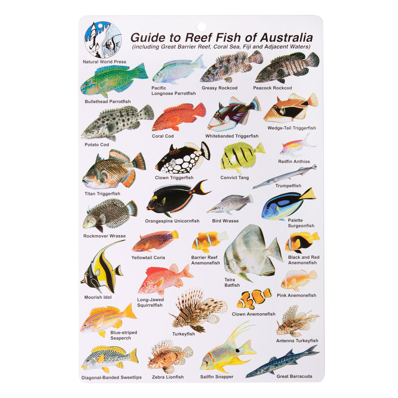 Natural World Laminated Guide to Reef Fish of Australia ID Card
