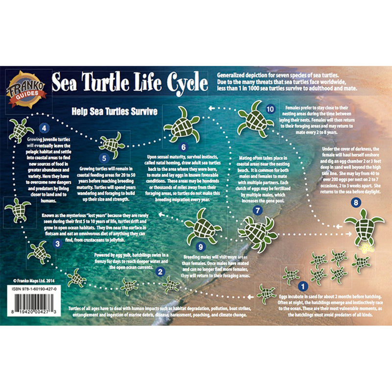 Franko Maps Sea Turtle Lifecycle Creature Guide 5.5 X 8.5 Inch