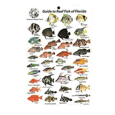 Reef Fish Of Florida Card