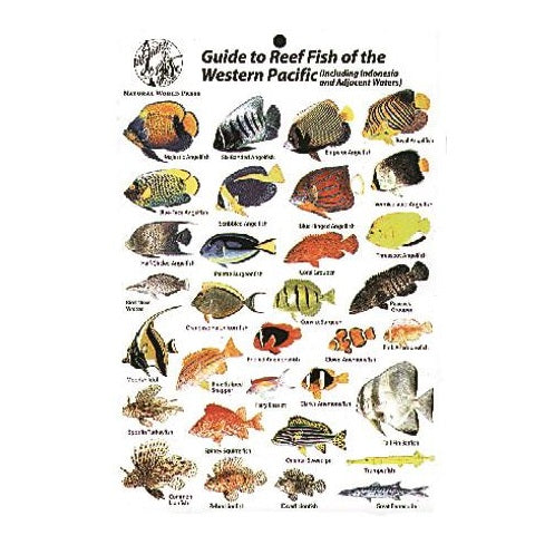 Reef Fish Of Western Pacific
