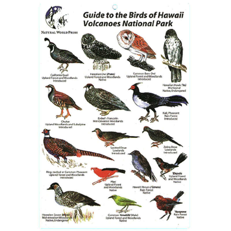 Birds Of Hawaii Volcanoes Card