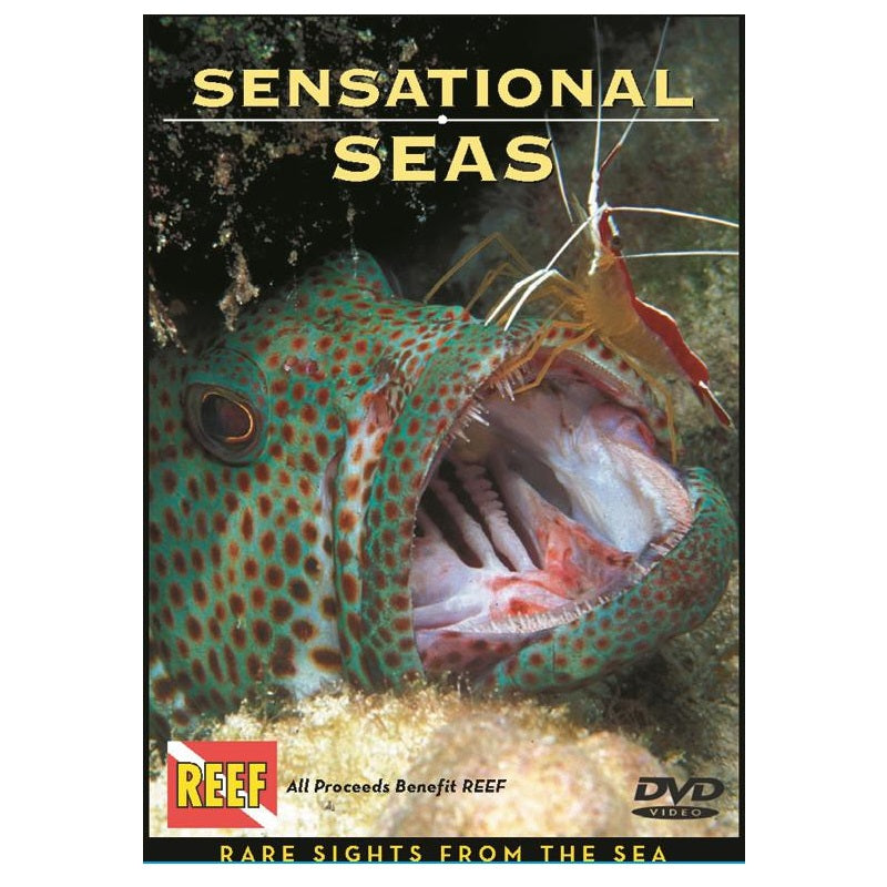 Sensational Seas DVD