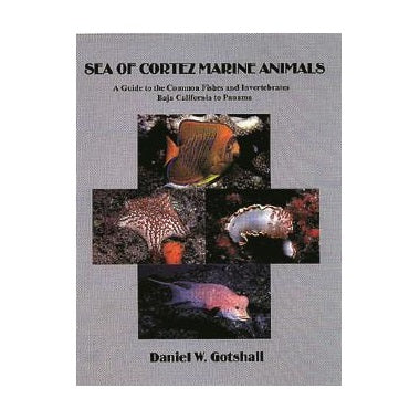 Sea Of Cortes Marine Animals