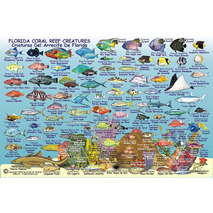 Franko Maps Florida State Reef Dive Creature Guide 6 X 9 Inch