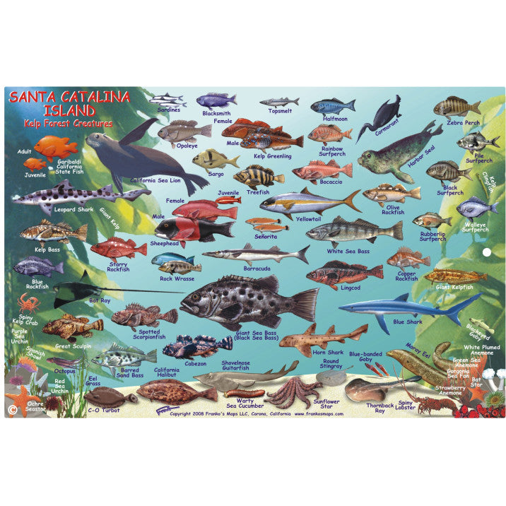Franko Maps Santa Catalina Reef Dive Creature Guide 6 X 9 Inch