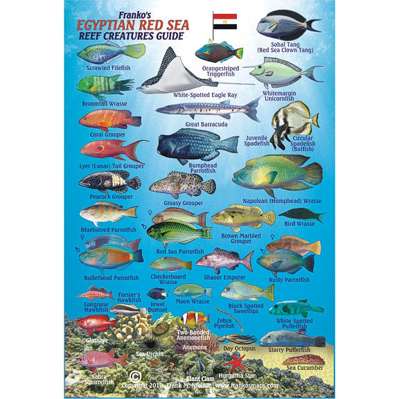 Franko Maps Egyptian Red Sea Reef Creature Guide 5.5 X 8.5 Inch