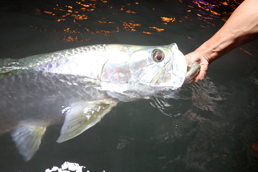 Snapper and Miami Tarpon on Fly and  Mixed Tackle Approach