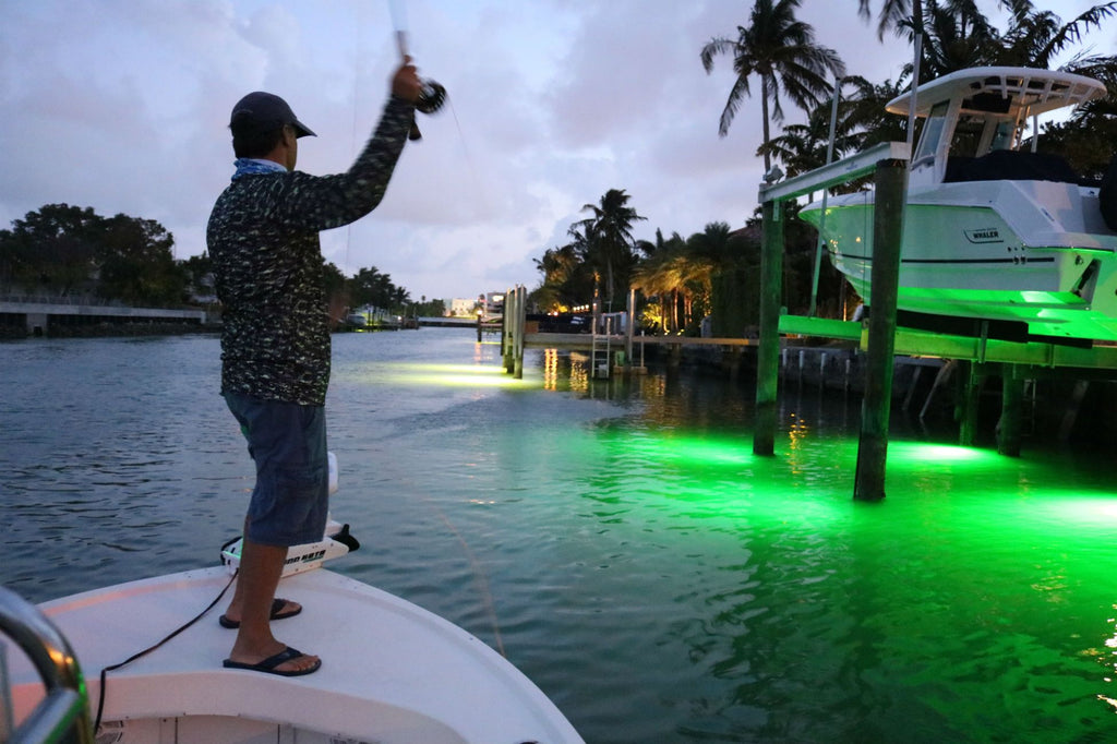 Sight Fishing Large Tarpon on Dock Lights