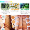 ACF : J Cat Aquasurance Compact Foundation Wholesale-Cosmeticholic