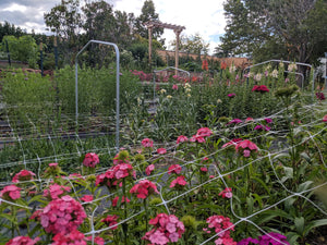 Backyard Cut Flower Garden Course in collaboration with Sego Lily Farm