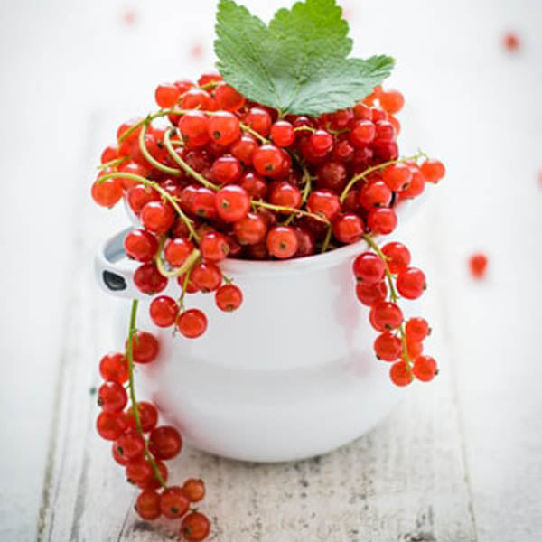 Currants: 'Cherry Red'