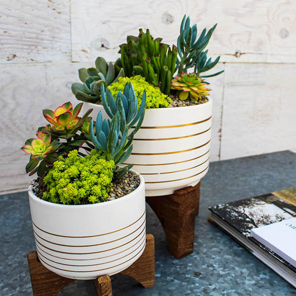 White & Gold Planter on Stand