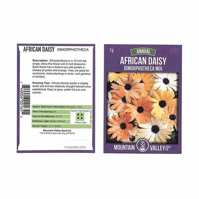 Annual Flower Seeds - African Daisy 'Dimorphotheca Mix'