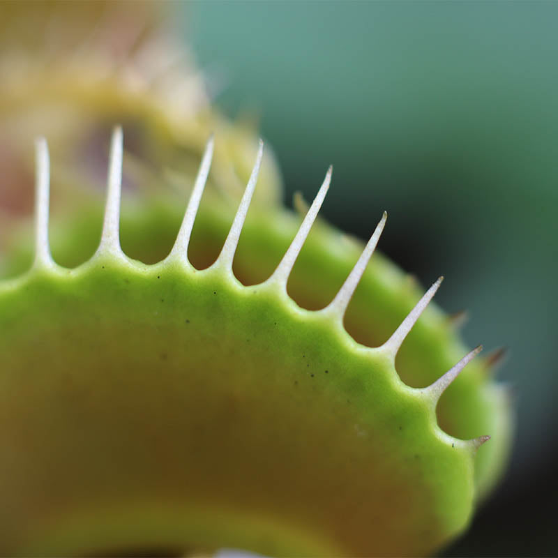 Carnivorous Plants: The Beasts of the Bog