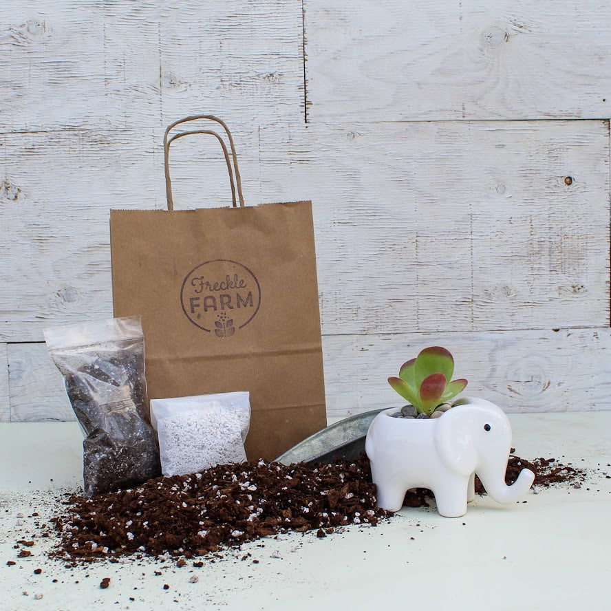 Animal Planter Kit: White Elephant