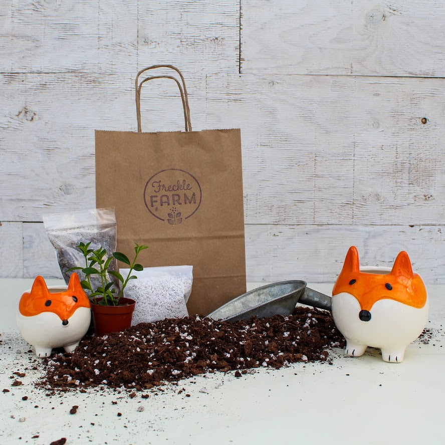 Animal Planter Kit: Fox