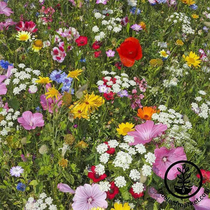 Wildflower Seeds- Hummingbird & Butterfly Mix