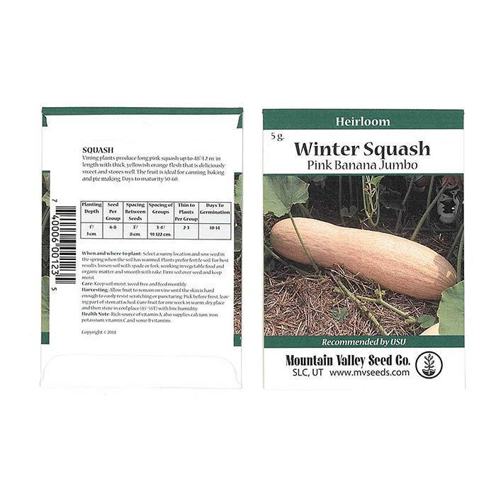 Seeds-Winter Squash, 'Pink Banana Jumbo'