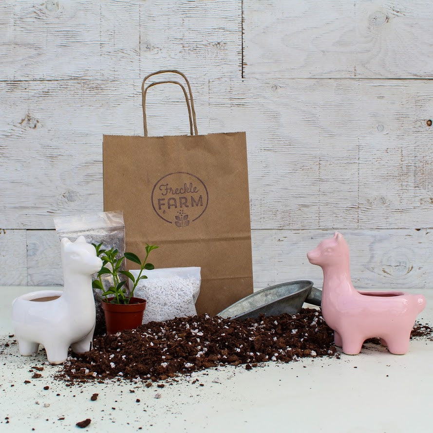 Animal Planter Kit: Llama