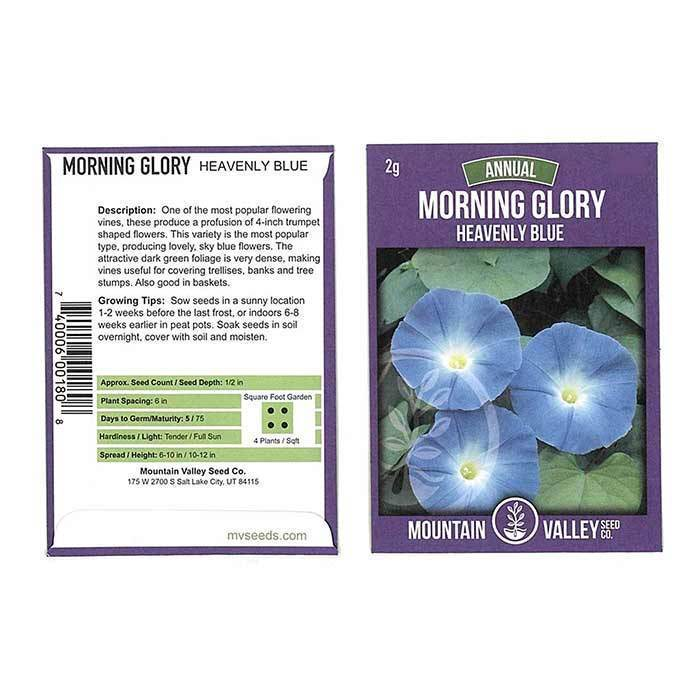 Annual Flower Seeds - Morning Glory 'Heavenly Blue'