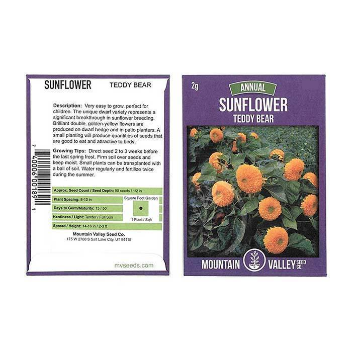 Annual Flower Seeds - Sunflower 'Teddy Bear'