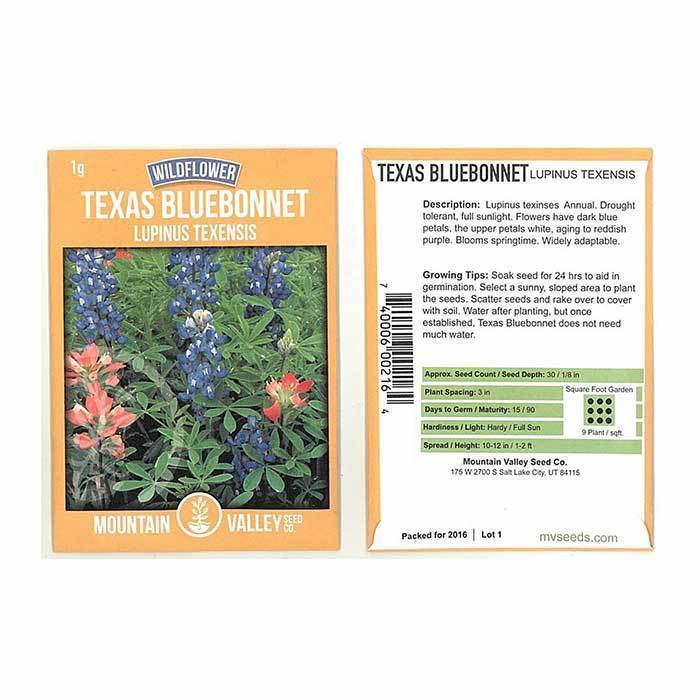 Wildflower Seeds - Texas Bluebonnet Lupinus texensis