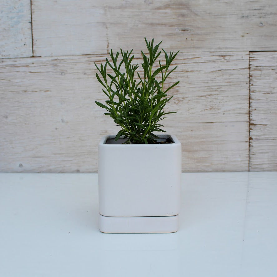 Square White Planter - 3.5""