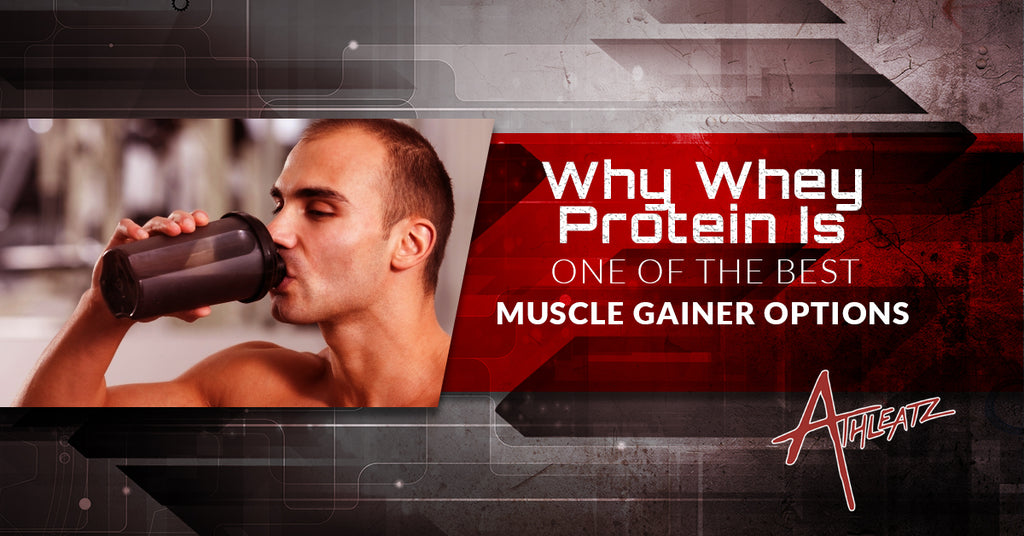 Why Whey Protein Is One Of The Best Muscle Gainer Options