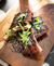 Teriyaki-Glazed Tender Belly Baby Back Ribs Recipe