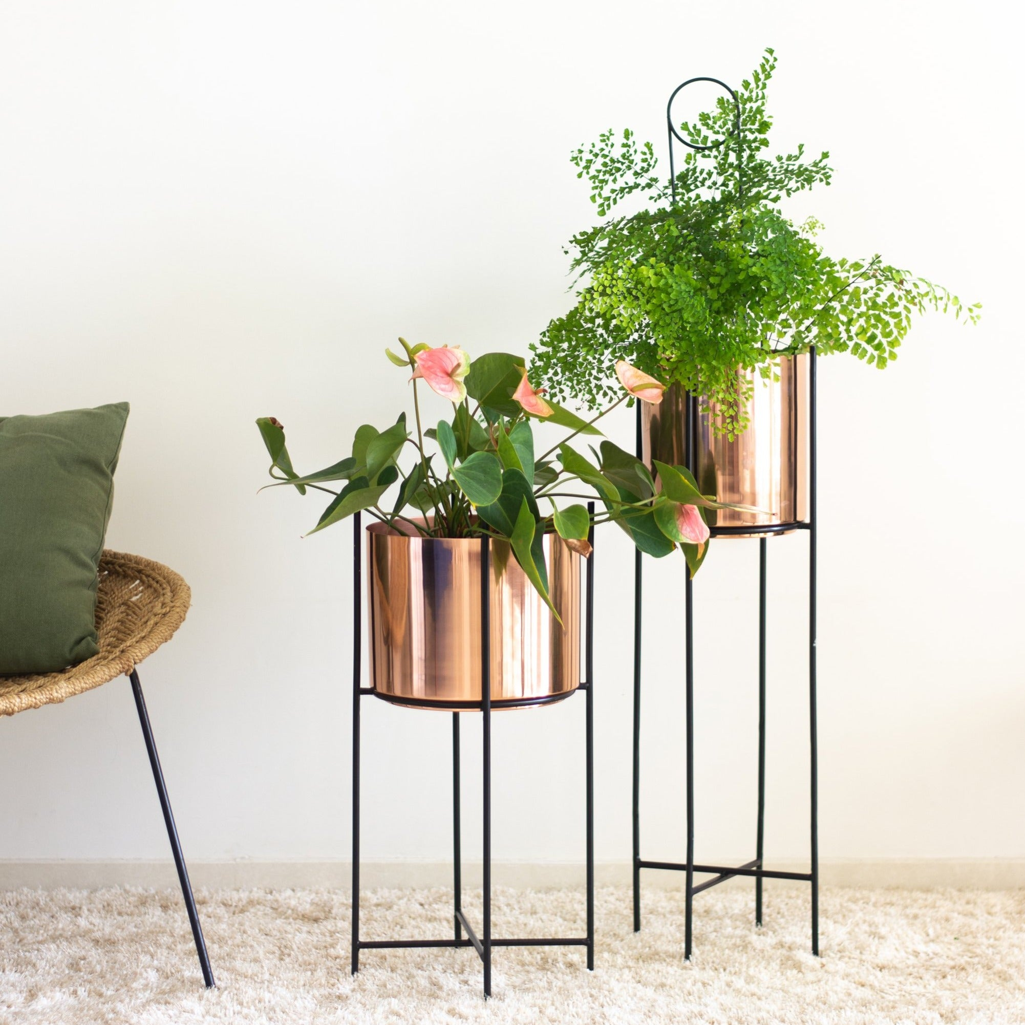Marigold tall & stout planters in a living room