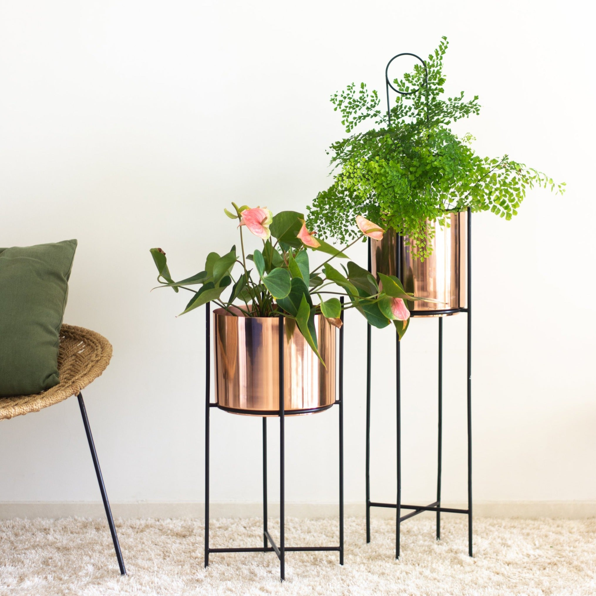 Marigold tall & stout planters in a living room with plants in it