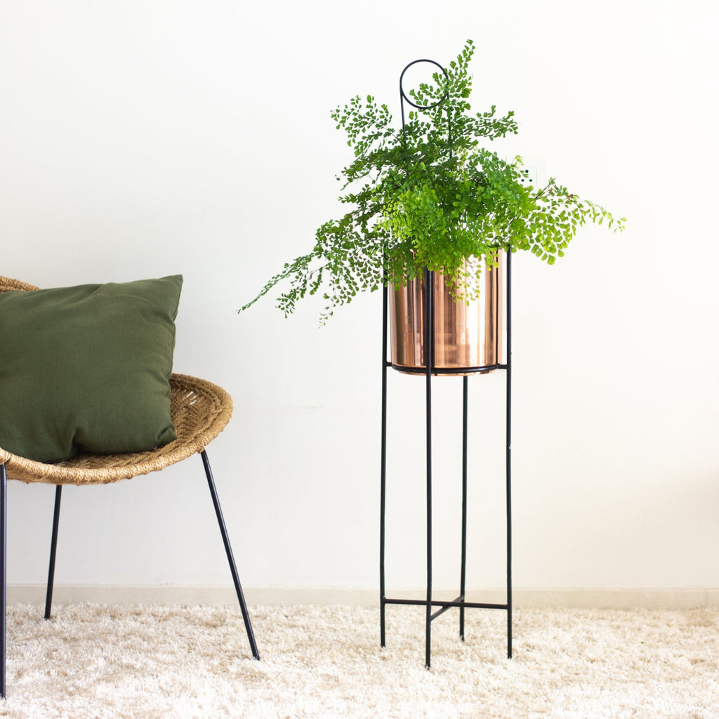 Marigold copper planters in a living  room with fern plant