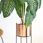 Marigold copper planters in a living  room with dumb cane plant